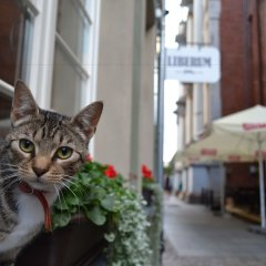 Отель Liberum Польша, Гданьск - отзывы, цены и фото номеров - забронировать отель Liberum онлайн фото 2