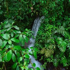 Отель Chachagua Rainforest Ecolodge фото 5