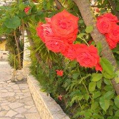 Отель Mirabelle Hotel Греция, Аргасио - отзывы, цены и фото номеров - забронировать отель Mirabelle Hotel онлайн фото 2
