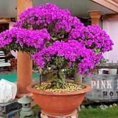 Отель Villa Pink House Вьетнам, Далат - отзывы, цены и фото номеров - забронировать отель Villa Pink House онлайн фото 6