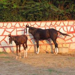 Отель Palace Anjali -The Ranch at Charbhuja с домашними животными