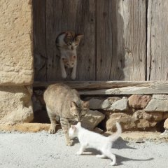 Отель Casas Rurales Peñagolosa с домашними животными