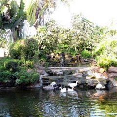 Rachawadee Resort and Hotel фото 3