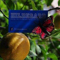 Hildegard Турция, Аланья - 2 отзыва об отеле, цены и фото номеров - забронировать отель Hildegard онлайн