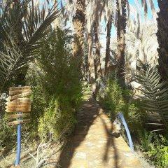 Отель Riad Tagmadart Ferme D'hôte Марокко, Загора - отзывы, цены и фото номеров - забронировать отель Riad Tagmadart Ferme D'hôte онлайн фото 18