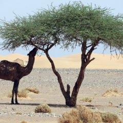Отель Sahara Dream Camp Марокко, Мерзуга - отзывы, цены и фото номеров - забронировать отель Sahara Dream Camp онлайн пляж фото 2