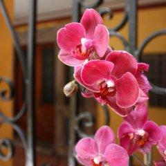 Отель La Querencia DF Мексика, Мехико - отзывы, цены и фото номеров - забронировать отель La Querencia DF онлайн фото 5