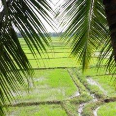 Отель Heaven Upon Rice Fields Шри-Ланка, Анурадхапура - отзывы, цены и фото номеров - забронировать отель Heaven Upon Rice Fields онлайн