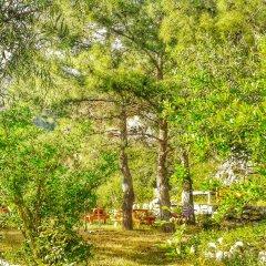 Гостевой Дом Dionysos Lodge фото 4