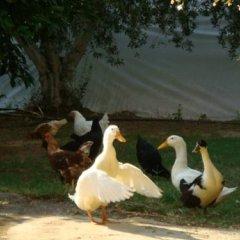 Отель Antalya Farm House фото 3