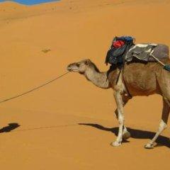 Отель Auberge Ocean des Dunes Марокко, Мерзуга - отзывы, цены и фото номеров - забронировать отель Auberge Ocean des Dunes онлайн фото 13