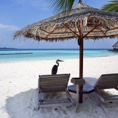 Отель Gangehi Island Resort пляж фото 2