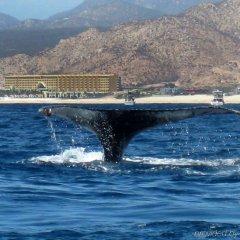 Отель Marquis Los Cabos, Resort & Spa - Adults Only пляж фото 2