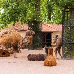 Отель Hampton By Hilton Amsterdam Centre East Амстердам с домашними животными