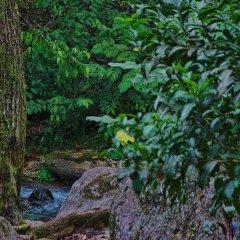 Отель Chachagua Rainforest Ecolodge фото 3