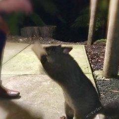 Отель Lemonthyme Wilderness Retreat с домашними животными
