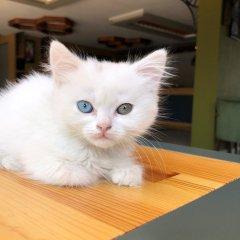 My Suit Otel Турция, Ван - отзывы, цены и фото номеров - забронировать отель My Suit Otel онлайн с домашними животными