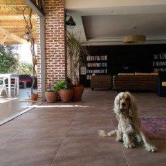 Mediteran Hotel Турция, Калкан - отзывы, цены и фото номеров - забронировать отель Mediteran Hotel онлайн с домашними животными