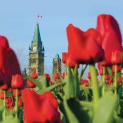 Отель Best Western Plus Gatineau-Ottawa Канада, Гатино - отзывы, цены и фото номеров - забронировать отель Best Western Plus Gatineau-Ottawa онлайн фото 3