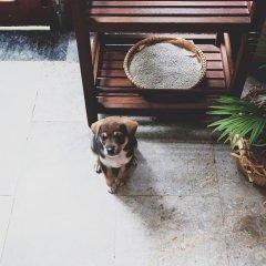 Отель Mali Home 1 с домашними животными