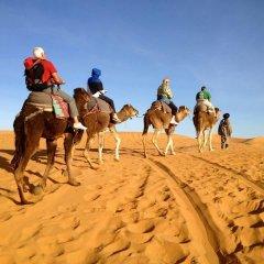 Отель La Gazelle Bleue Марокко, Мерзуга - отзывы, цены и фото номеров - забронировать отель La Gazelle Bleue онлайн приотельная территория фото 2