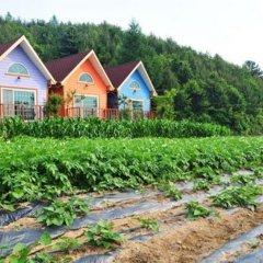 Отель Pyeongchang Sky Garden Pension Южная Корея, Пхёнчан - отзывы, цены и фото номеров - забронировать отель Pyeongchang Sky Garden Pension онлайн фото 5