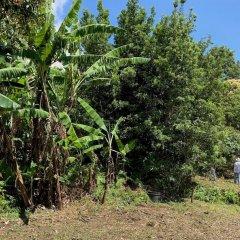 Отель Estalagem Senhora Da Rosa Понта-Делгада приотельная территория фото 2