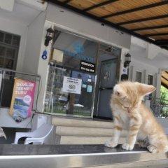 Мини-Отель Kemer Pansiyon с домашними животными