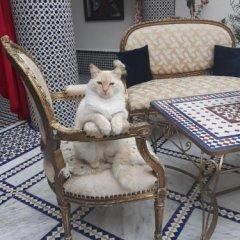 Отель Riad Amor Марокко, Фес - отзывы, цены и фото номеров - забронировать отель Riad Amor онлайн с домашними животными
