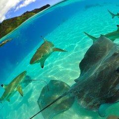 Отель Tahiti Sail and Dive спа фото 2