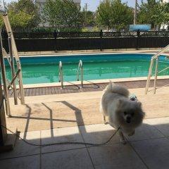 Отель Dardanos Pansiyon Гузеляли бассейн фото 2