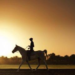Отель Desert Palm ОАЭ, Дубай - отзывы, цены и фото номеров - забронировать отель Desert Palm онлайн спортивное сооружение
