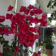 Отель Elinotel Polis Hotel Греция, Ханиотис - отзывы, цены и фото номеров - забронировать отель Elinotel Polis Hotel онлайн фото 10