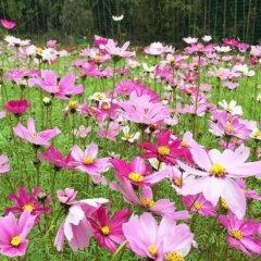 Отель Fogang Hemingzhou Sakura Hot Spring Resort фото 14