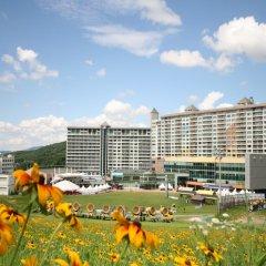 Отель Welli Hilli Park Южная Корея, Пхёнчан - отзывы, цены и фото номеров - забронировать отель Welli Hilli Park онлайн бассейн
