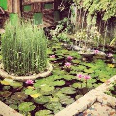 Отель The Lotus Garden Hotel Филиппины, Пуэрто-Принцеса - отзывы, цены и фото номеров - забронировать отель The Lotus Garden Hotel онлайн фото 10