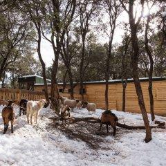 Отель Michlifen Ifrane Suites & Spa с домашними животными