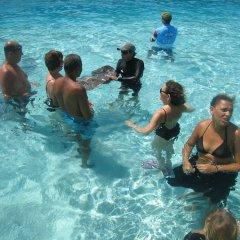 Отель Les Tipaniers Французская Полинезия, Муреа - отзывы, цены и фото номеров - забронировать отель Les Tipaniers онлайн бассейн