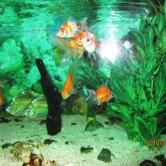 Отель Kandy Paradise Resort фото 3