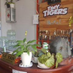 Отель Tiny Tigers Далат гостиничный бар