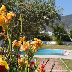 Urla Surf House Турция, Урла - отзывы, цены и фото номеров - забронировать отель Urla Surf House онлайн бассейн