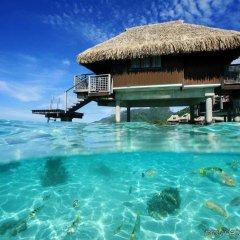 Отель Hilton Moorea Lagoon Resort and Spa Французская Полинезия, Муреа - отзывы, цены и фото номеров - забронировать отель Hilton Moorea Lagoon Resort and Spa онлайн бассейн фото 3