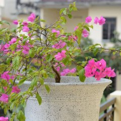 Отель Botanic Garden Villas фото 4