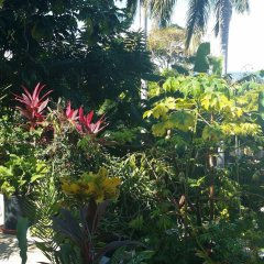 Отель Palm View Guesthouse And Conference Centre Монтего-Бей фото 5