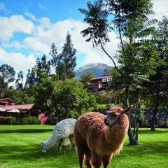 Belmond Hotel Rio Sagrado с домашними животными