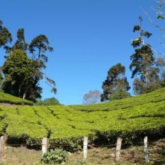 Green Magic Home in Munnar, India from 49$, photos, reviews - zenhotels.com outdoors photo 2
