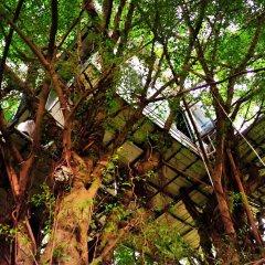 Отель Dao Anh Khanh Treehouse Ханой фото 2