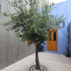 Отель Saint George Studios Греция, Родос - отзывы, цены и фото номеров - забронировать отель Saint George Studios онлайн фото 3