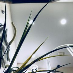 Гостиница Guest rooms Club Marinn удобства в номере