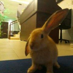 Отель Nooit Gedacht Holiday Resort Унаватуна с домашними животными